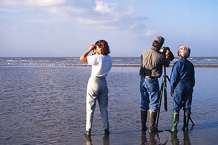Birdwatchers at Aransas Bay